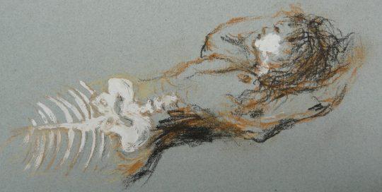 Sirène dessin de Agnès Gomez